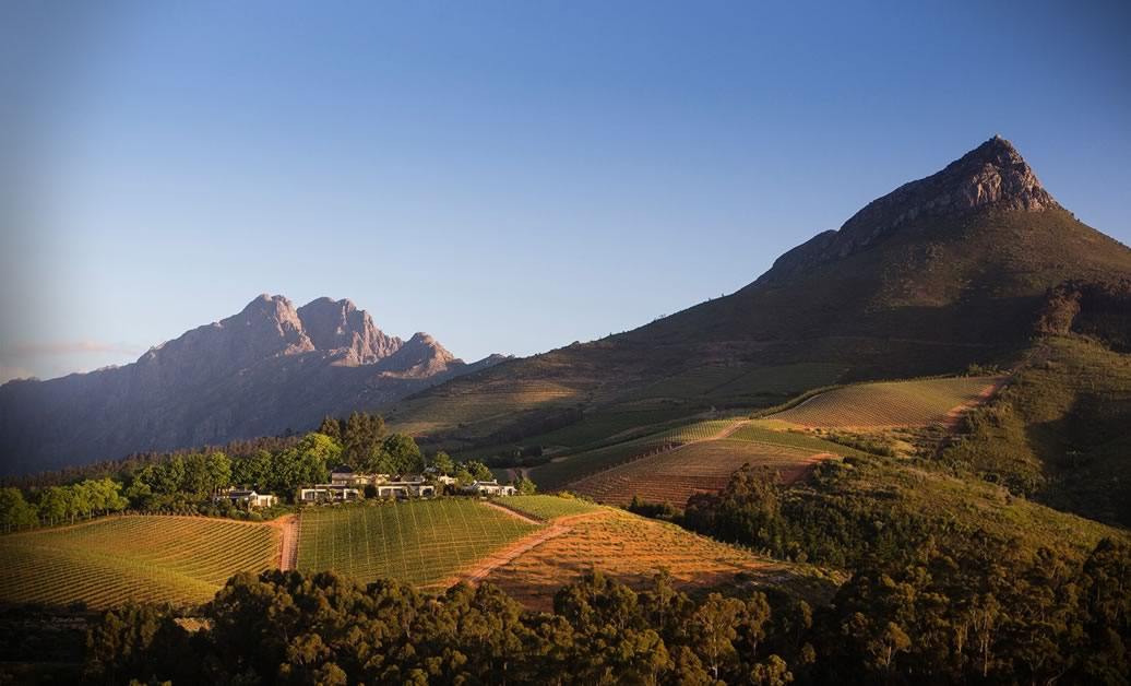 The present and future of South African wine