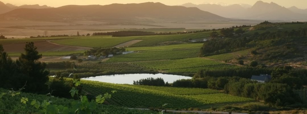 The new frontier – Wine from South Africa