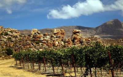 #DrinkChenin Cederberg Wines