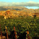 Cederberg Wines