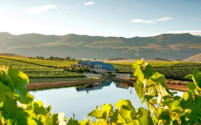 Featured winery – Creation Wines