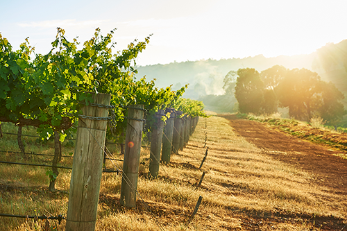 Millbrook Winery