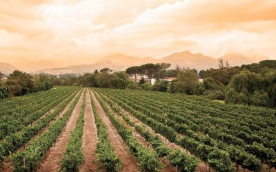 Featured wine varietal: Bordeaux style red blend