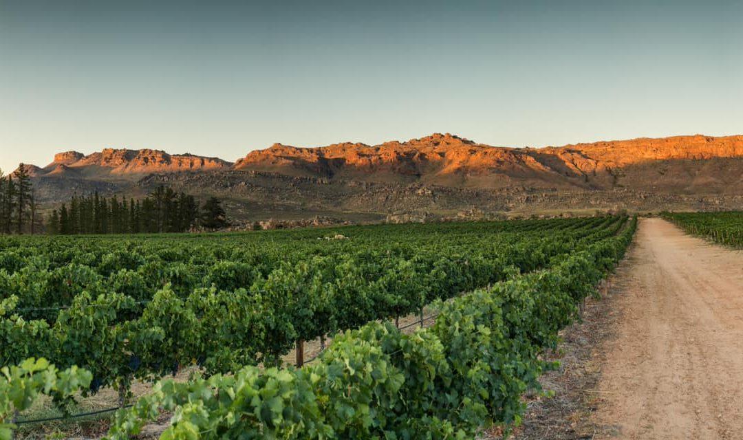 Featured grape varietal – Shiraz