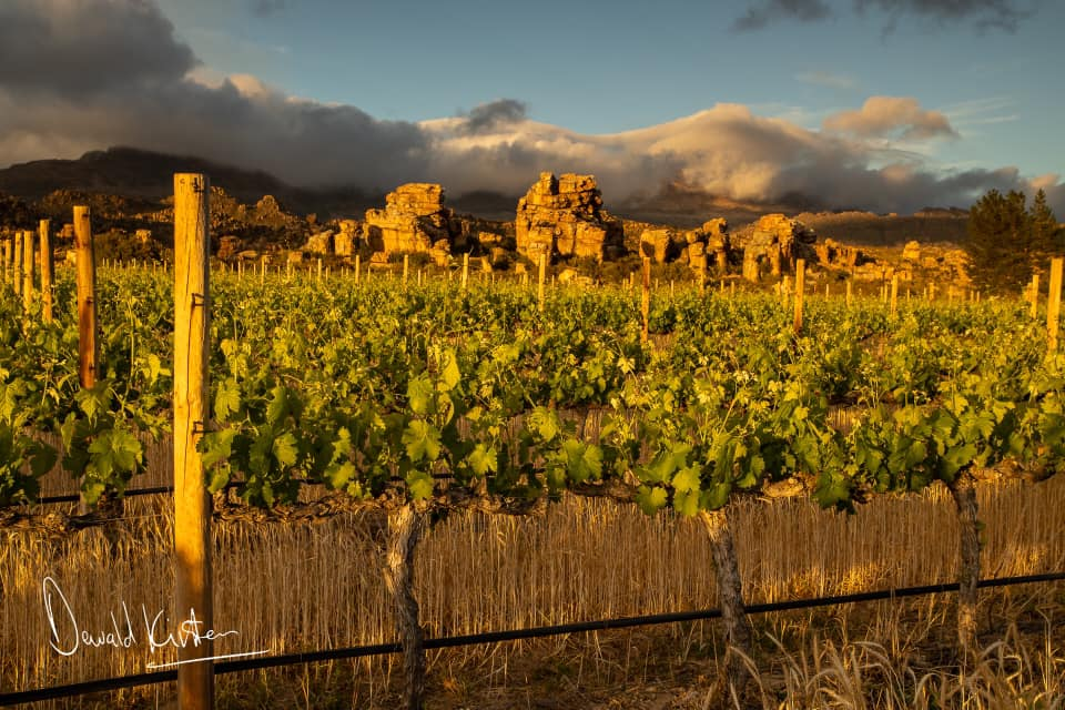 Featured winery – Cederberg Wines