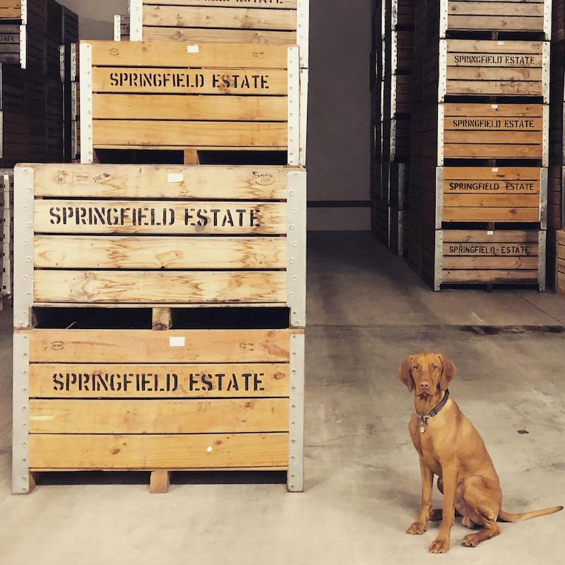Featured winery – Springfield Estate - Made on Honour