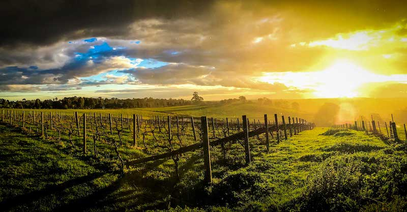 Featured winery – Kings of Kangaroo Ground