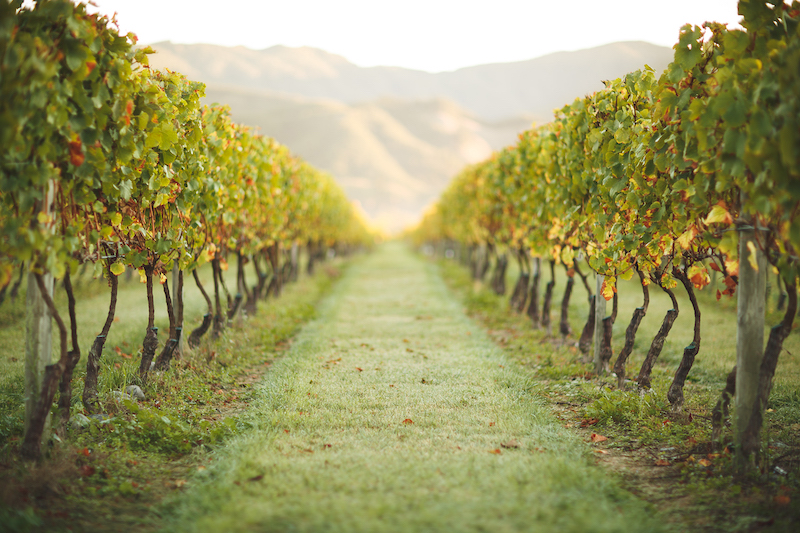 Featured winery – No.1 Family Estate Wines