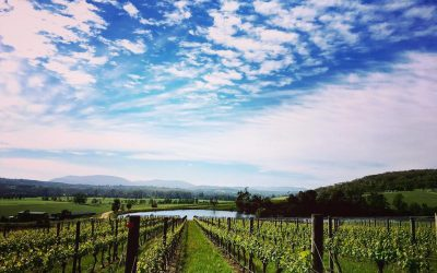 Featured winery – Santolin Wines